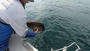 Click image for larger version.  Name:Catch & release.jpg Views:0 Size:59.6 KB ID:120758