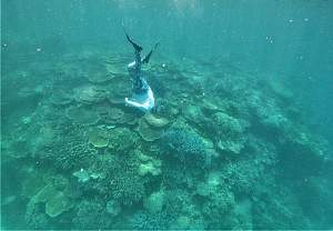 Click image for larger version.  Name:Freediver ann (2).jpg Views:0 Size:64.5 KB ID:122827